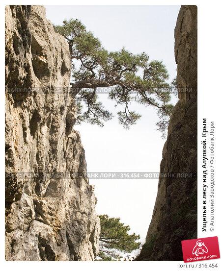 Ущелье в лесу над Алупкой. Крым, фото № 316454, снято 7 мая 2005 г. (c) Анатолий Заводсков / Фотобанк Лори