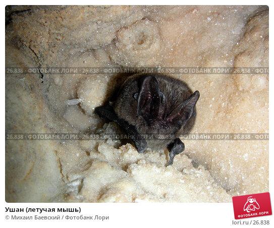 Ушан (летучая мышь), фото № 26838, снято 2 января 2007 г. (c) Михаил Баевский / Фотобанк Лори