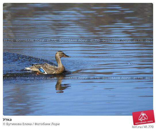 Утка, фото № 41770, снято 16 апреля 2007 г. (c) Бутинова Елена / Фотобанк Лори