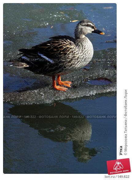 Купить «Утка», фото № 149822, снято 12 апреля 2006 г. (c) Морозова Татьяна / Фотобанк Лори