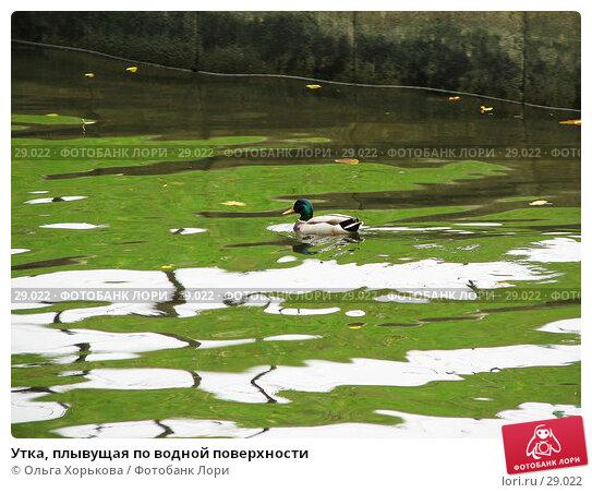 Купить «Утка, плывущая по водной поверхности», фото № 29022, снято 15 октября 2006 г. (c) Ольга Хорькова / Фотобанк Лори