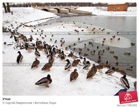 Утки, фото № 155010, снято 16 декабря 2007 г. (c) Сергей Лаврентьев / Фотобанк Лори
