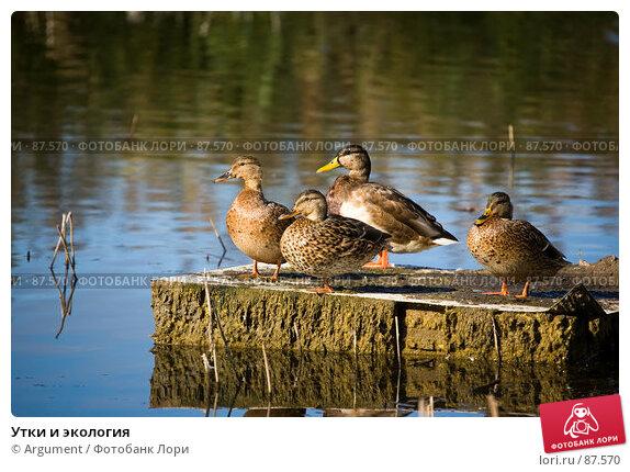 Утки и экология, фото № 87570, снято 20 сентября 2007 г. (c) Argument / Фотобанк Лори