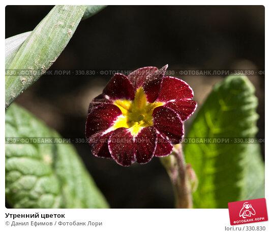 Утренний цветок, фото № 330830, снято 8 мая 2008 г. (c) Данил Ефимов / Фотобанк Лори