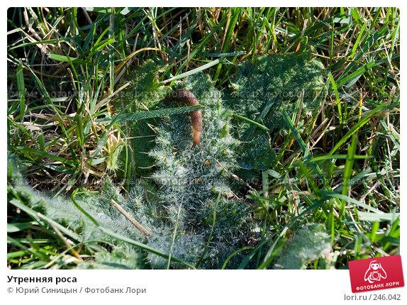Купить «Утренняя роса», фото № 246042, снято 30 сентября 2007 г. (c) Юрий Синицын / Фотобанк Лори