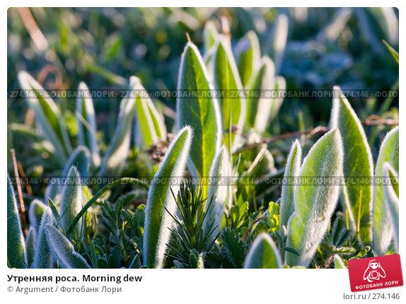 Утренняя роса. Morning dew, фото № 274146, снято 26 апреля 2008 г. (c) Argument / Фотобанк Лори