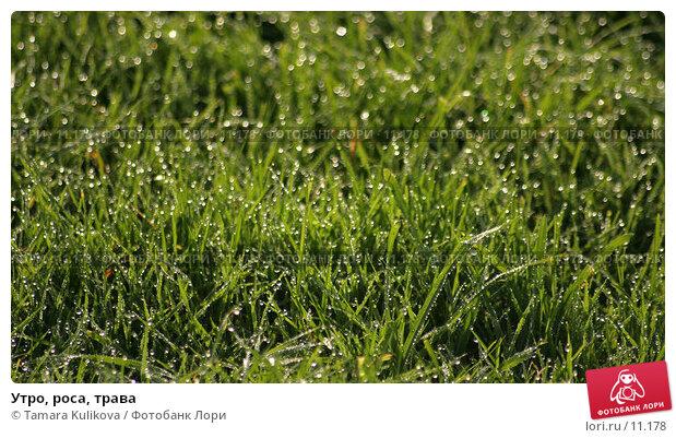 Утро, роса, трава, фото № 11178, снято 17 октября 2006 г. (c) Tamara Kulikova / Фотобанк Лори
