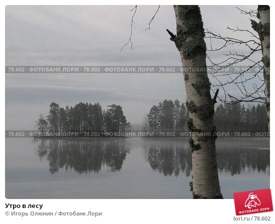Утро в лесу, фото № 78602, снято 10 мая 2005 г. (c) Игорь Олюнин / Фотобанк Лори