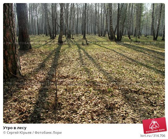 Купить «Утро в лесу», фото № 314706, снято 18 мая 2006 г. (c) Сергей Юрьев / Фотобанк Лори