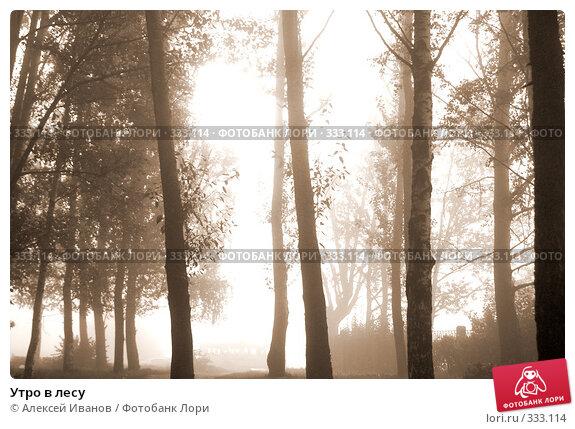 Утро в лесу, фото № 333114, снято 29 сентября 2007 г. (c) Алексей Иванов / Фотобанк Лори
