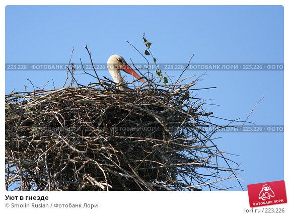 Уют в гнезде, фото № 223226, снято 20 мая 2007 г. (c) Smolin Ruslan / Фотобанк Лори