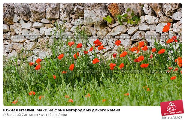 Южная Италия. Маки на фоне изгороди из дикого камня, фото № 8978, снято 11 мая 2005 г. (c) Валерий Ситников / Фотобанк Лори