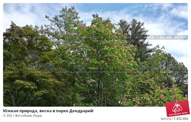 Купить «Южная природа, весна в парке Дендрарий», фото № 7432866, снято 9 мая 2015 г. (c) DiS / Фотобанк Лори