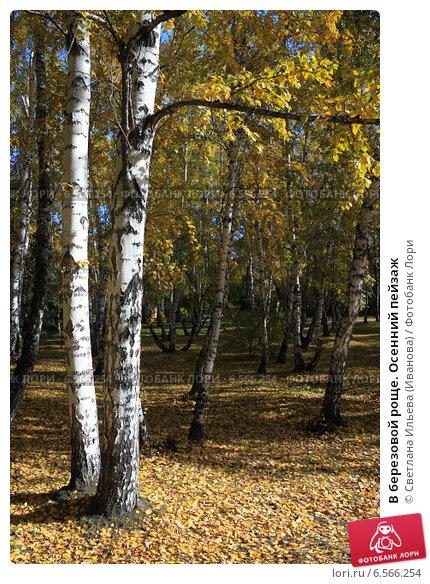 Купить «В березовой роще. Осенний пейзаж», фото № 6566254, снято 27 сентября 2014 г. (c) Светлана Ильева (Иванова) / Фотобанк Лори