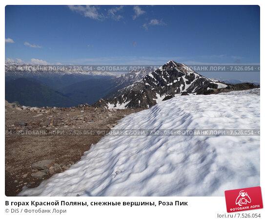 Купить «В горах Красной Поляны, снежные вершины, Роза Пик», фото № 7526054, снято 5 июня 2015 г. (c) DiS / Фотобанк Лори