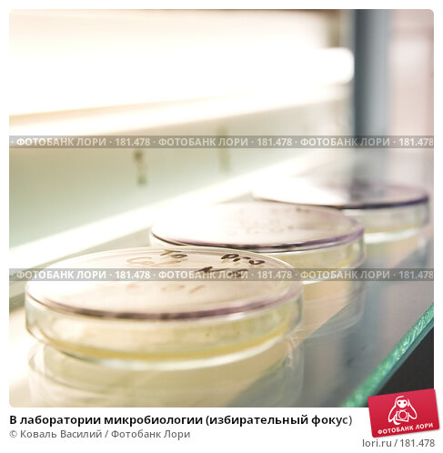 В лаборатории микробиологии (избирательный фокус), фото № 181478, снято 9 февраля 2007 г. (c) Коваль Василий / Фотобанк Лори