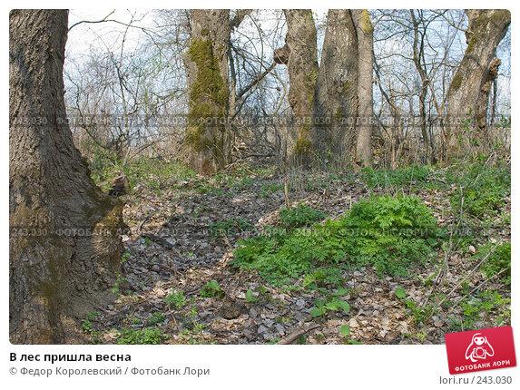 В лес пришла весна, фото № 243030, снято 4 апреля 2008 г. (c) Федор Королевский / Фотобанк Лори
