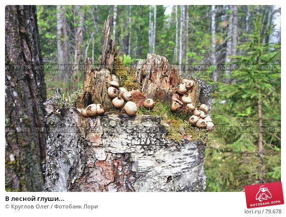 В лесной глуши..., фото № 79678, снято 6 июня 2007 г. (c) Круглов Олег / Фотобанк Лори