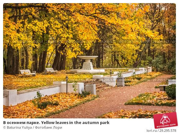 Купить «В осеннем парке. Yellow leaves in the autumn park», фото № 29295578, снято 15 октября 2011 г. (c) Baturina Yuliya / Фотобанк Лори