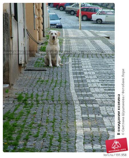 В ожидании хозяина, фото № 191958, снято 8 мая 2006 г. (c) Светлана Шушпанова / Фотобанк Лори