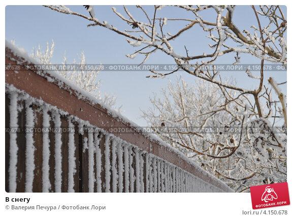 В снегу. Стоковое фото, фотограф Валерия Печура / Фотобанк Лори