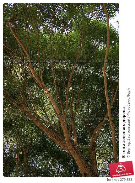 Купить «В тени зеленого дерева», фото № 279838, снято 1 июля 2007 г. (c) Виктор Застольский / Фотобанк Лори