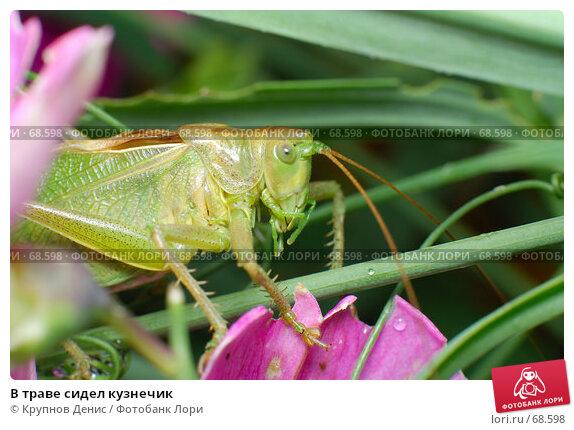 В траве сидел кузнечик, фото № 68598, снято 3 июля 2007 г. (c) Крупнов Денис / Фотобанк Лори