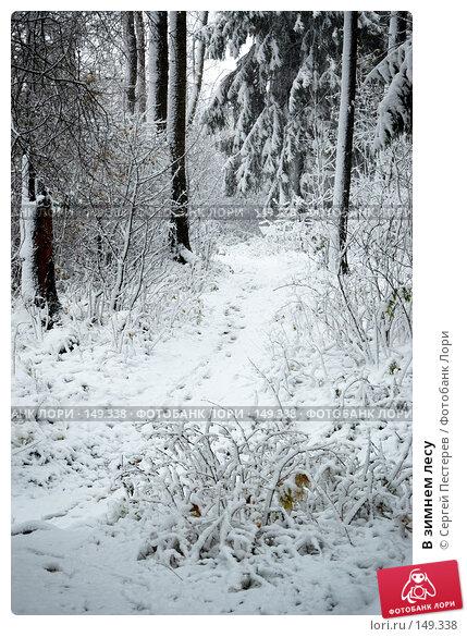 В зимнем лесу, фото № 149338, снято 14 октября 2007 г. (c) Сергей Пестерев / Фотобанк Лори