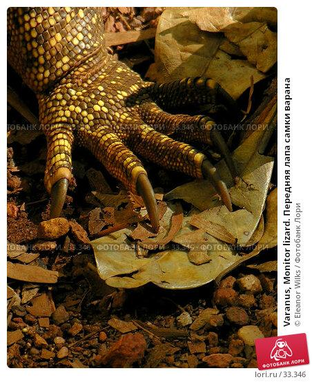Varanus, Monitor lizard. Передняя лапа самки варана, фото № 33346, снято 22 июня 2006 г. (c) Eleanor Wilks / Фотобанк Лори