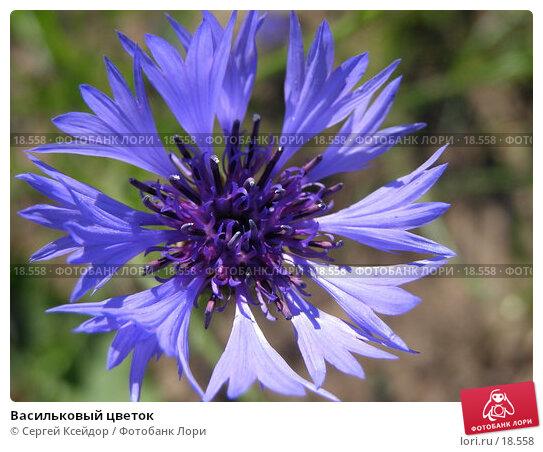 Васильковый цветок, фото № 18558, снято 20 июня 2006 г. (c) Сергей Ксейдор / Фотобанк Лори
