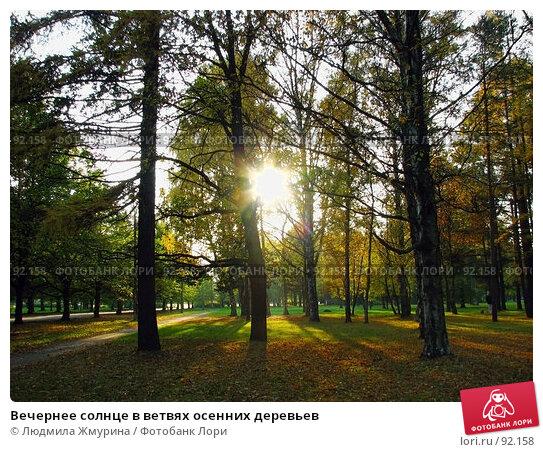 Вечернее солнце в ветвях осенних деревьев, фото № 92158, снято 10 октября 2005 г. (c) Людмила Жмурина / Фотобанк Лори