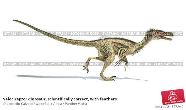 Купить «Velociraptor dinosaur, scientifically correct, with feathers.», иллюстрация № 21877942 (c) PantherMedia / Фотобанк Лори
