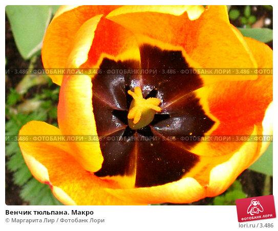Венчик тюльпана. Макро, фото № 3486, снято 21 мая 2006 г. (c) Маргарита Лир / Фотобанк Лори