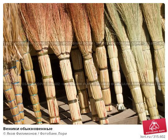 Веники обыкновенные, фото № 315602, снято 8 мая 2008 г. (c) Яков Филимонов / Фотобанк Лори