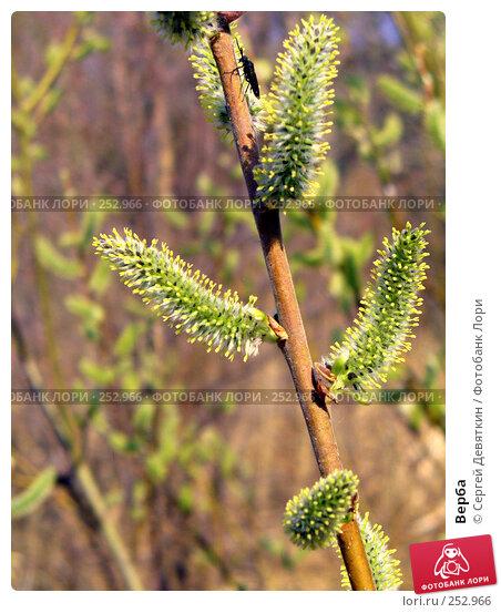 Купить «Верба», фото № 252966, снято 9 апреля 2008 г. (c) Сергей Девяткин / Фотобанк Лори