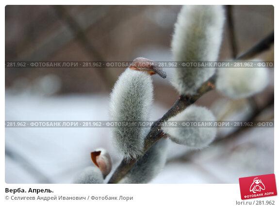Верба. Апрель., фото № 281962, снято 14 апреля 2007 г. (c) Селигеев Андрей Иванович / Фотобанк Лори