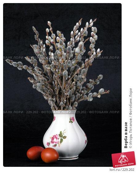 Верба в вазе, фото № 229202, снято 30 октября 2006 г. (c) Игорь Потапов / Фотобанк Лори