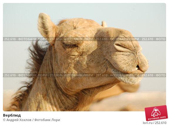 Верблюд, фото № 252610, снято 28 мая 2006 г. (c) Андрей Хохлов / Фотобанк Лори