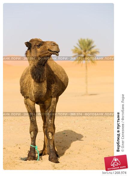 Верблюд в пустыне, фото № 268974, снято 28 февраля 2008 г. (c) Олег Селезнев / Фотобанк Лори