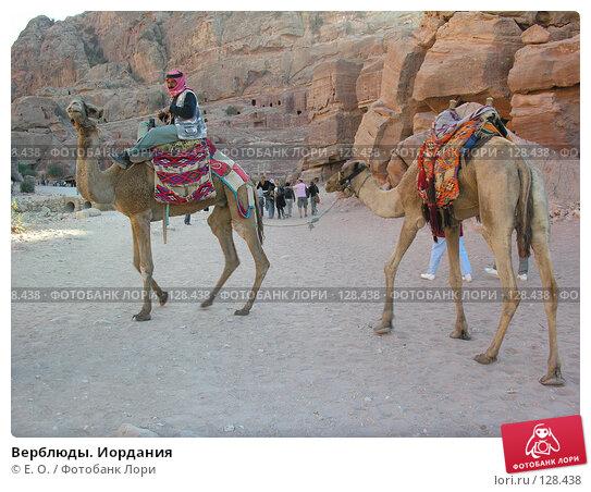 Купить «Верблюды. Иордания», фото № 128438, снято 25 ноября 2007 г. (c) Екатерина Овсянникова / Фотобанк Лори