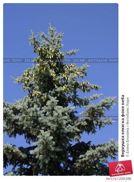 Верхушка елки на фоне неба, фото № 234946, снято 12 июня 2007 г. (c) Елена Блохина / Фотобанк Лори