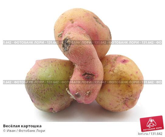 Весёлая картошка, фото № 131642, снято 8 июля 2007 г. (c) Иван / Фотобанк Лори