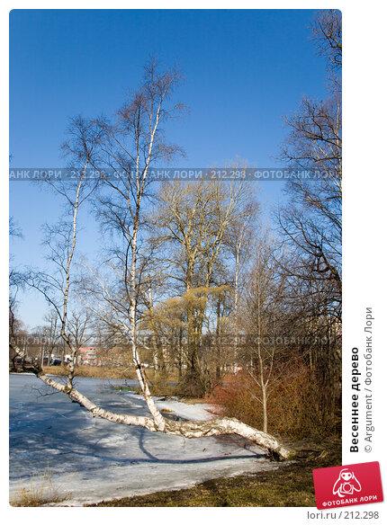 Весеннее дерево, фото № 212298, снято 28 марта 2007 г. (c) Argument / Фотобанк Лори