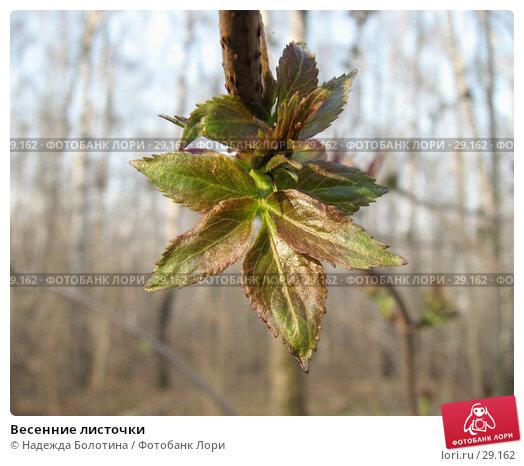 Весенние листочки, фото № 29162, снято 27 апреля 2006 г. (c) Надежда Болотина / Фотобанк Лори