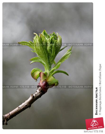 Купить «Весенние листья», фото № 173118, снято 28 апреля 2007 г. (c) Надежда Болотина / Фотобанк Лори