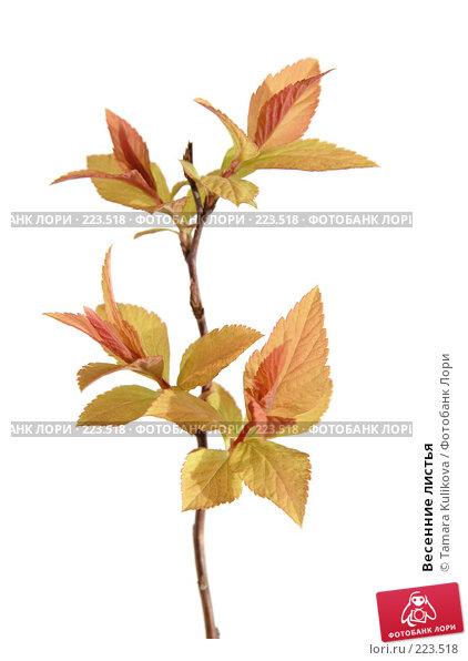 Весенние листья, фото № 223518, снято 14 марта 2008 г. (c) Tamara Kulikova / Фотобанк Лори