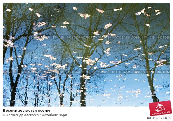Весенние листья осени, эксклюзивное фото № 174018, снято 30 апреля 2006 г. (c) Александр Алексеев / Фотобанк Лори