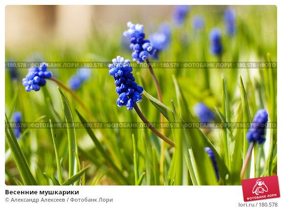 Весенние мушкарики, эксклюзивное фото № 180578, снято 29 апреля 2007 г. (c) Александр Алексеев / Фотобанк Лори