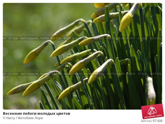 Купить «Весенние побеги молодых цветов», фото № 57926, снято 7 июня 2005 г. (c) Harry / Фотобанк Лори