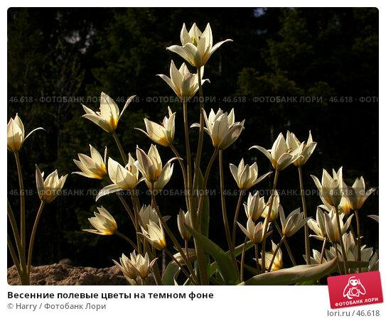 Купить «Весенние полевые цветы на темном фоне», фото № 46618, снято 12 мая 2007 г. (c) Harry / Фотобанк Лори